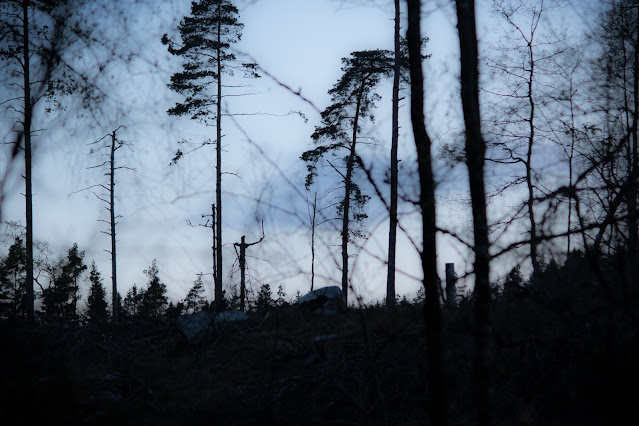 Forrest at night with tree silhouettes against the sky