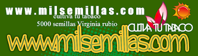 Cultiva tu tabaco Virgini Rubio compra tus semillas