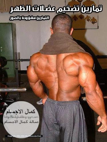 تمارين تضخيم عضلات الظهر