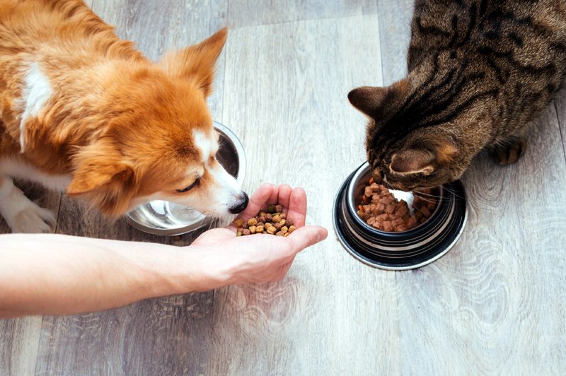 How To Read Pet Food Labels