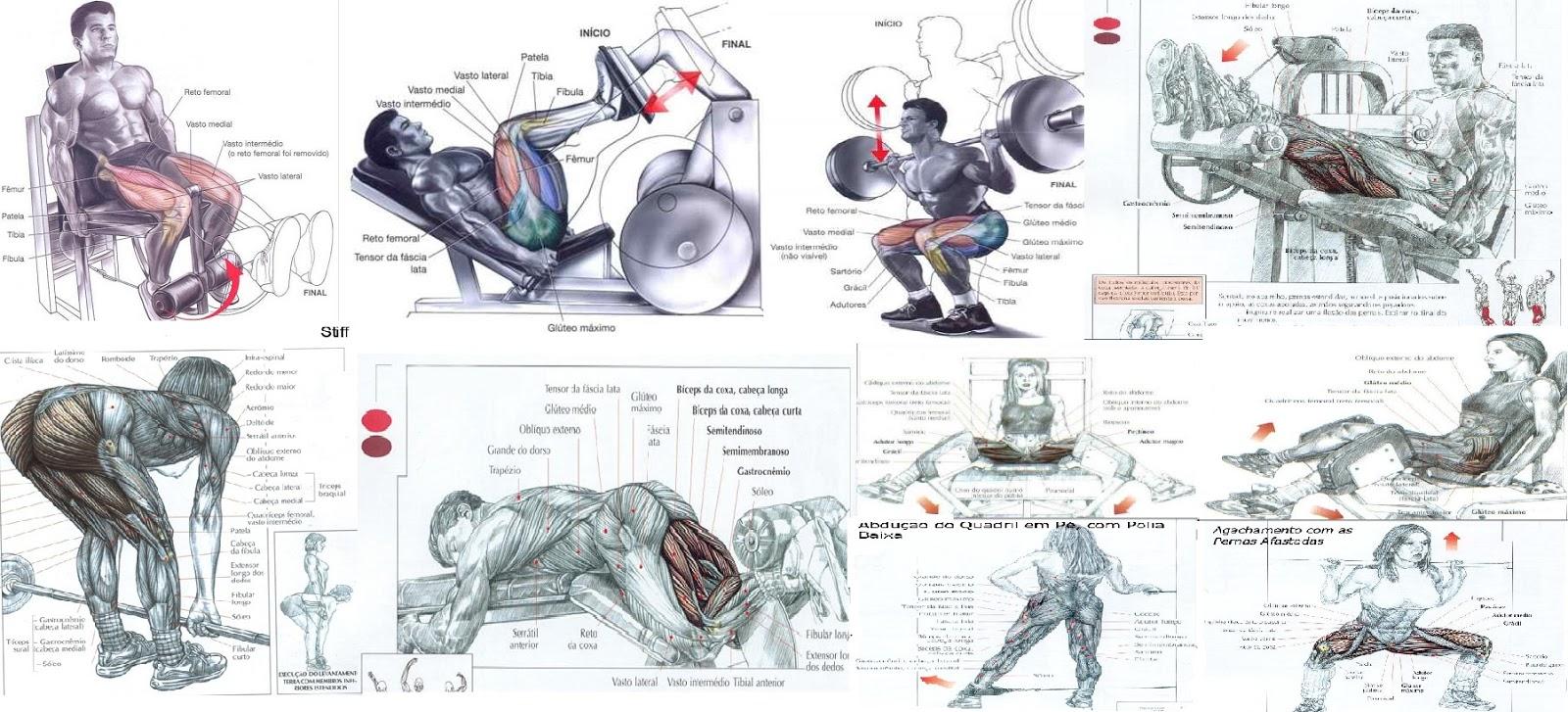 Conhecido Hipertrofia: Treino para quem busca Hipertrofia - Ganho rápido de  CP74