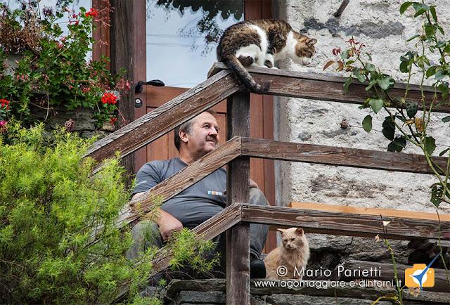 Uomo e gatti a Sonogno