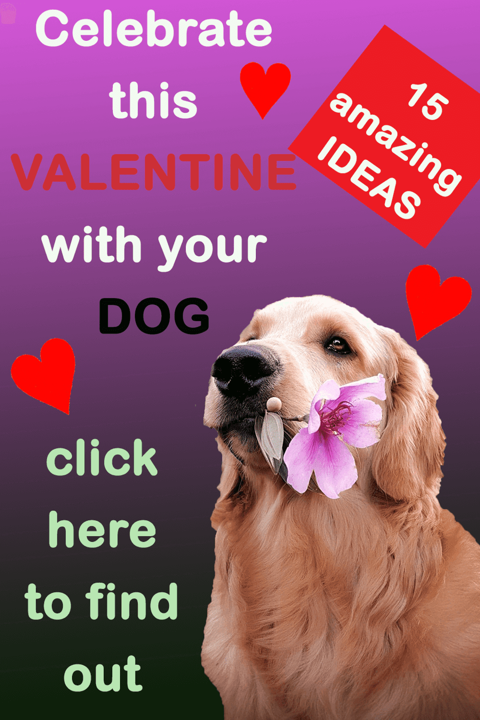 Spend this Valentine's Day with your pooch and make it super special for him/her. Click on the image to find 15 amazing things you can do this Valentine's Day with your fur kid and make the day spectacular and memorable. Valentine gift for dogs | Valentine day gifts | Valentine day for dogs | Valentine day celebration with dog | Best valentine day gift ideas for dogs.