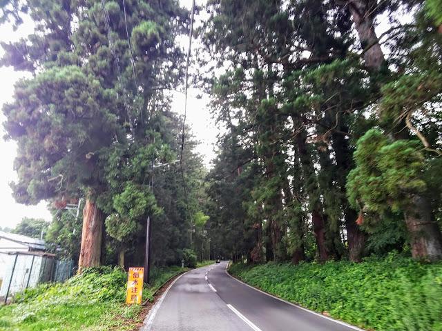 会津西街道 旧道 杉並木