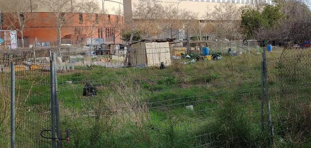 Imagen 17: En Benimaclet sigue las mismas pautas que en otras ciudades y pueblos de la Comunidad Valenciana: Masías, casas y tierras ocupadas, chabolas construidas en solares.