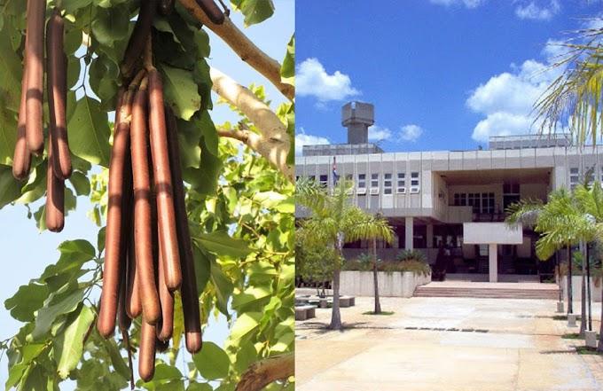 Régimen desarrolla árbol que da salchichas para hacer frente a la crisis alimentaria