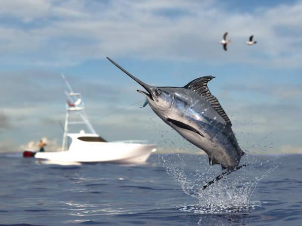 Swordfish Fishing - Without Killing Them
