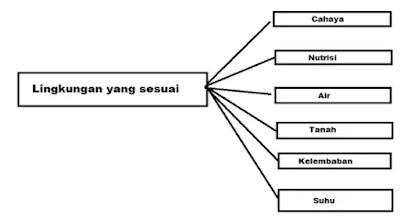 Kunci Jawaban Kelas 4 Tema 6 Halaman 28