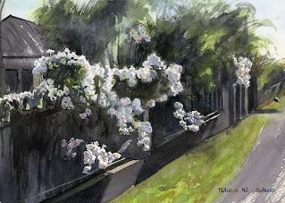 家のフェンスに沿った白い花の生け垣。水彩画