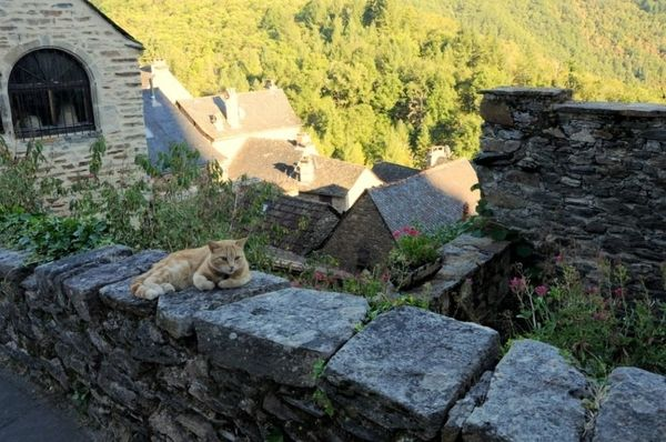 photos de chats de france