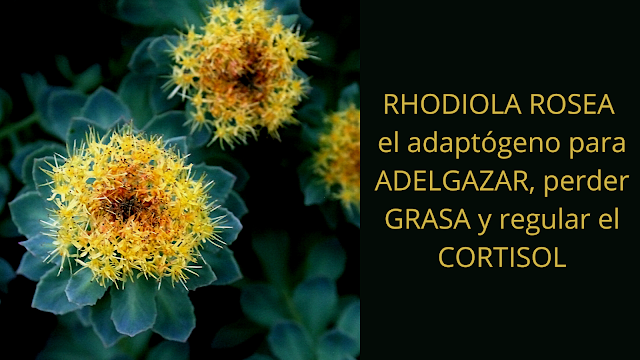 COMPRAR RHODIOLA ROSAE