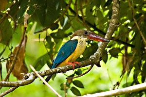 bird sanctuaries india