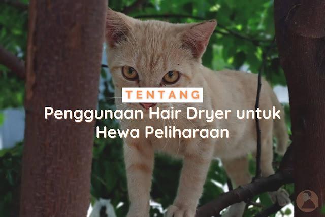 hair dryer untuk hewan peliharaan