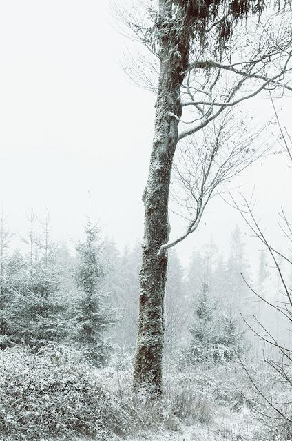 Schnee, snowing, Sauerland, Winter