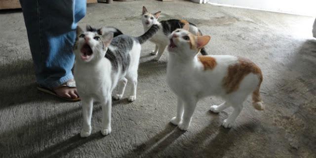 Tolong Share, Jangan Semena-mena, Tahukah Jika Didekati Kucing Ada 3 Pertanda dari Allah?