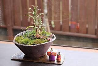 半月の陶盤の上にのったそり型の鉢の山野草盆栽と小さな立雛