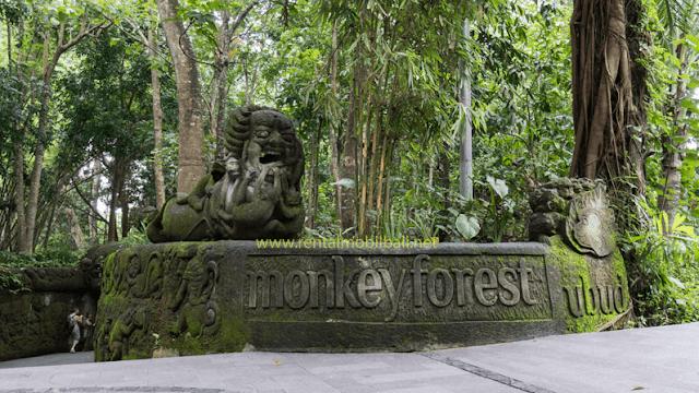 wisata-monkey-fores