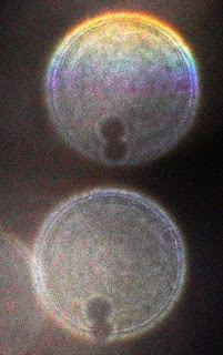 column of orbs with holes
