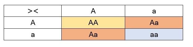 Jika keturunan pertama dari dua induk galur murni yang berbeda disilangkan dengan sesamanya, maka akan diperoleh lagi sifat kedua induknya yang dominan dan resesif dengan perbandingan