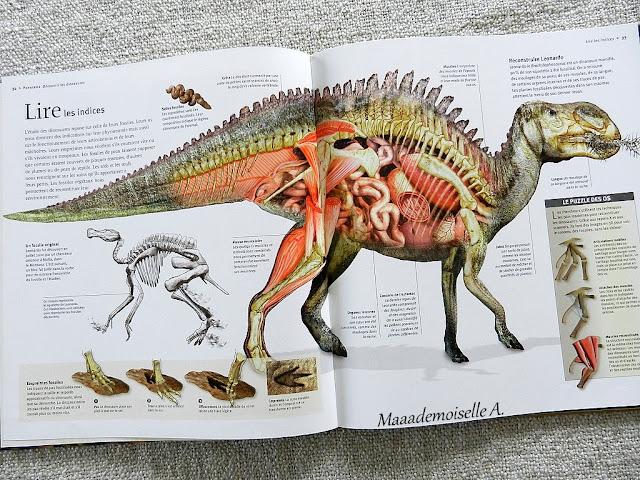 || Les dinosaures à la loupe (Présentation & Avis)(Chut, les enfants lisent # 76)