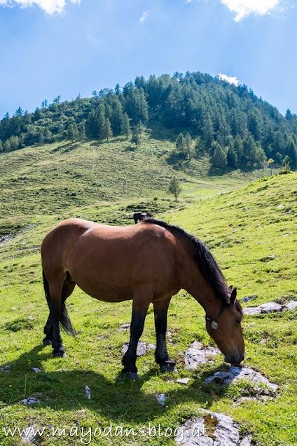 Pferd auf der Alm