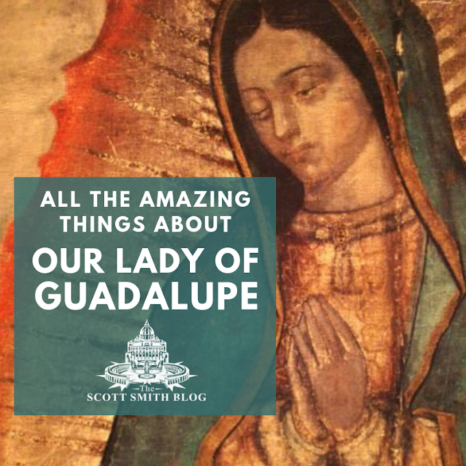 All the Amazing Things about Our Lady of Guadalupe: The Essential Guide to Our Lady of Guadalupe