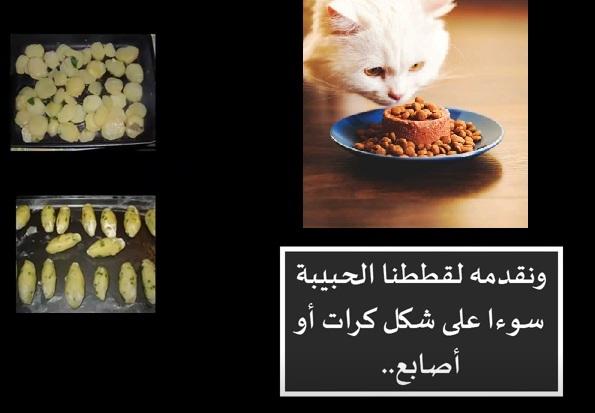 """"""" """"اكل قطط"""","""""""" """"اكل قطط بيتي"""","""""""","""""""","""""""" """"اكل قطط صغيرة"""","""""""","""""""","""""""" """"اكل قطط الشوارع"""","""""""","""""""","""""""" """"اكل قطط معلب"""","""""""","""""""","""""""" """"اكل قطط عمر شهر"""","""""""","""""""","""""""" """"اكل قطط عمر شهرين"""","""""""","""""""","""""""" """"اكل قطط للبيع"""","""""""","""""""","""""""" """"اكل قطط رخيص"""","""""""","""""""","""""""" """"أكل قطط الهملايا"""","""""""","""""""","""""""" """"اكل قطط الشارع"""","""""""","""""""","""""""" """"اكل قطط الشيرازي"""","""""""","""""""","""""""" """"اكل قطط اون لاين"""","""""""","""""""","""""""" """"اكل قطط العثيم"""","""""""","""""""","""""""" """"اكل قطط الكويت"""","""""""","""""""","""""""" """"اكل قطط التميمي"""","""""""","""""""","""""""" """"اكل قطط birbo"""","""""""","""""""","""""""" """"اكل القطط birbo"""","""""""","""""""","""""""" """"اكل القطط royal canin"""","""""""","""""""","""""""" """"اكل قطط 3 شهور"""","""""""","""""""","""""""" """"اكل قطط 3 اسابيع"""","""""""","""""""","""""""" """"اكل قطط friskies"""","""""""","""""""","""""""" """"اكل قطط felix"""","""""""","""""""","""""""" """"اكل القطط friskies"""","""""""","""""""","""""""" """"اكل القطط felix"""","""""""","""""""","""""""" """"اكل القطط في المنام"""","""""""","""""""","""""""" """"اكل القطط في البيت"""","""""""","""""""","""""""" """"felicia اكل قطط"""","""""""","""""""","""""""" """"اكل قطط goody"""","""""""","""""""","""""""" """"اكل القطط miglior gatto"""","""""""","""""""","""""""" """"اكل قطط شهر"""","""""""","""""""","""""""" """"اكل قطط منزلي"""","""""""","""""""","""""""" """"اكل القطط kitekat"""","""""""","""""""","""""""" """"keke اكل قطط"""","""""""","""""""","""""""" """"اكل قطط mix"""","""""""","""""""","""""""" """"اكل القطط meow mix"""","""""""","""""""","""""""" """"اكل القطط me-o"""","""""""","""""""","""""""" """"اكل القطط monello"""","""""""","""""""","""""""" """"اكل قطط purina"""","""""""","""""""","""""""" """"اكل قطط reflex"""","""""""","""""""","""""""" """"اكل القطط reflex"""","""""""","""""""","""""""" """"royal اكل قطط"""","""""""","""""""","""""""" """"اكل قطط sheba"""","""""""","""""""","""""""" """"اكل القطط schesir"""","""""""","""""""","""""""" """"اكل القطط whiskas"""","""""""","""""""","""""""" """"اكل قطط مصري"""","""""""","""""""","""""""" """"اكل بيتي للقطط"""","""""""","""""""","""""""" """"اكل بيتي للقطط الصغيرة"""","""""""","""""""","""""""" """"اكل بيت للقطط"""","""""""","""""""","""""""" """"اكل قطط في البيت"""","""""""","""""""","""""""" """"اكل القطط البيتي"""","""""""","""""""","""""""" """"اكل بيتى للقطط"""","""""""","""""""","""""""" """"اكل قطط الصغيرة"""","""""""","""""""","""""""" """"اكل القطط الصغيرة"""","""""""","""""""","""""""" """"اكل القطط الصغيرة عمرها شهر"""","""""""","""""""","""""""" """"اكل القطط الصغيرة شهرين"""","""""""","""""""","""""""" """"اكل للقطط الصغيرة"""","""""""","""""""","""""""" """"اكل القطط الصغيرة الرضيعة"""","""""""","""""""","""""""" """"اكل القطط الصغيرة عمرها شهرين"""","""""""","""""""","""""""" """"اكل القطط الصغيرة عمرها أقل من شهر"""","""""""","""""""","""""""" """"اكل قطط شيرازى صغيرة"""","""""""","""""""","""""""" """"ميجلور اكل قطط"""","""""""","""""""","""""""" """"اكل القطط الشوارع"""","""""""","""""""","""""""" """"اكل القطط الشارع"""","""""""","""""""","""""""" """"افضل اكل قطط الشوارع"""","""""""","""""""","""""""" """"ماهو اكل قطط الشوارع"""","""""""","""""""","""""""" """"طعام قطط الشوارع"""","""""""","""""""","""""""" """"اكل قطط معلبات"""","""""""","""""""","""""""" """"اكل القطط معلبات"""","""""""","""""""","""""""" """"اكل معلب للقطط"""","""""""","""""""","""""""" """"اكل معلبات للقطط"""","""""""","""""""","""""""" """"اكل قطط"""