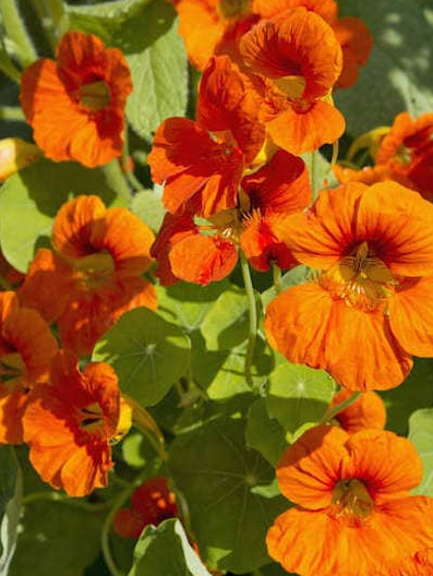 8 Plants That Ban Insects and Mosquitoes Naturally