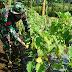 Bercocok Tanam, Brigif Para Raider 18/Kostrad Jaga Ketahanan Pangan