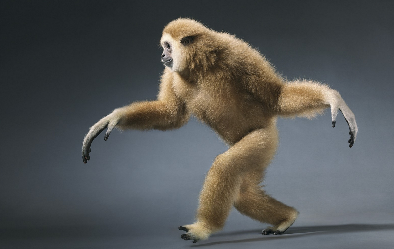 Tim Flach Photography Monkey