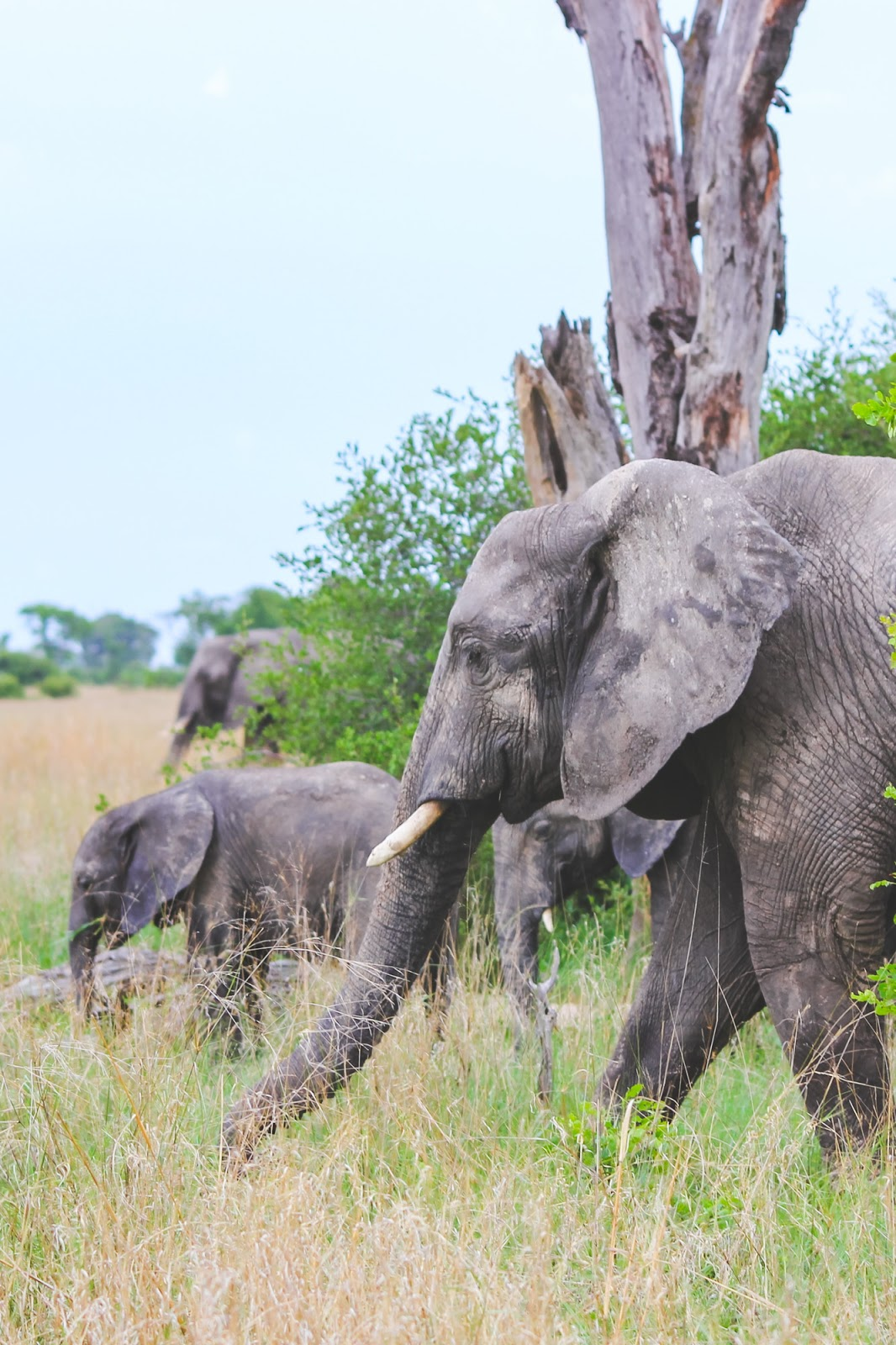 The Best Time to Go to Africa + Baby Animals of Hwange National Park