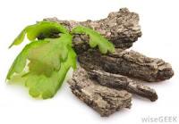 Manfaat Kulit Oak Putih Untuk Mengobati Wasir