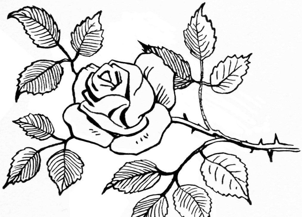 Cara Mewarnai Bunga Mawar | Collection Images