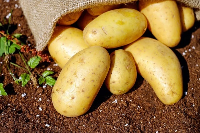 100 Funny Facts About Potatoes