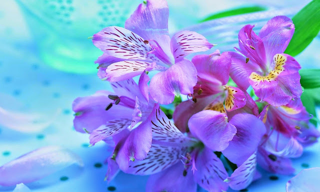 Kumpulan Foto Bunga Anggrek Terindah Di Dunia Terbaru 2017
