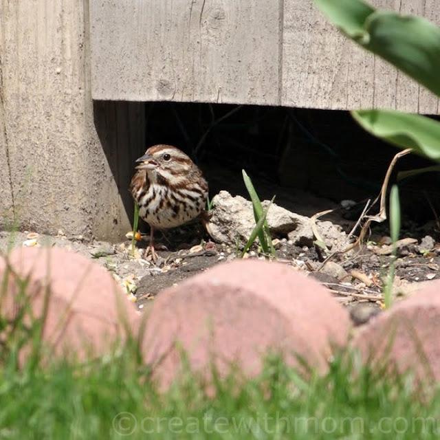 song garden bird
