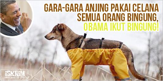 Gara-Gara Anjing Pakai Celana Semua Jadi Heboh! Obama Ikut Bingung