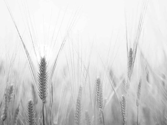 План сельскохозяйственного страхования на 2019 год