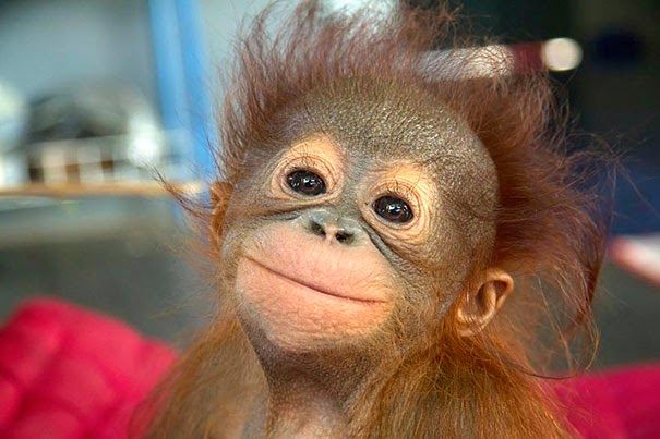 most adorable animals1