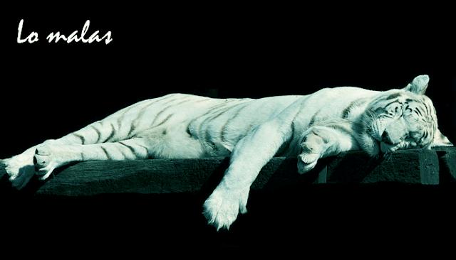 Harimau Malas