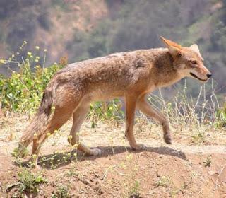 Animales que viven en desierto