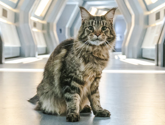 Grudge the Maine Coon cat actor in Star Trek Discovery. Photo: Twitter.