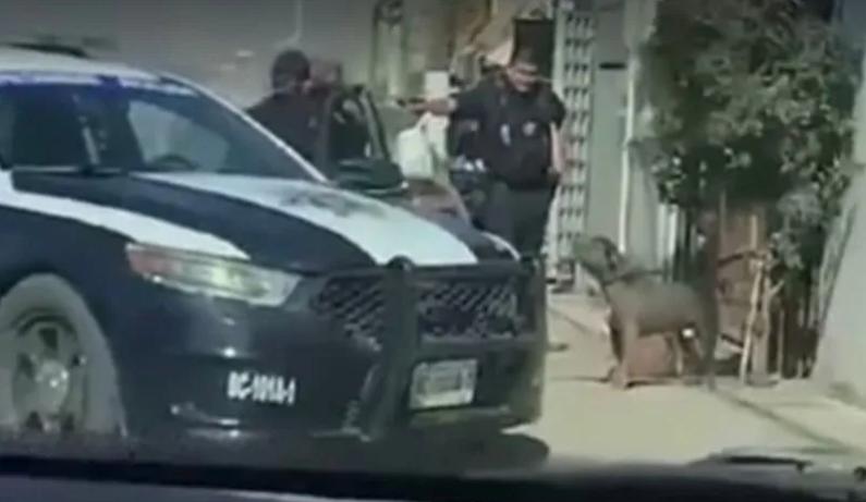 Video; un Policía en Tijuana le dispara a un perrito que estaba amarrado