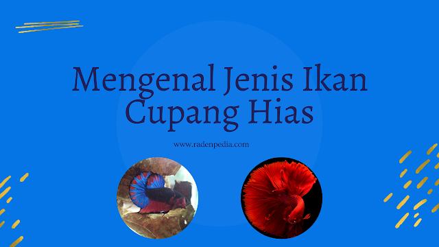 Mengenal Jenis Ikan Cupang Hias-radenpedia.com