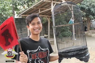 juara 1 lovebird bebas m3