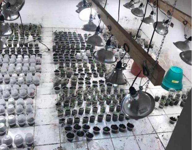 Aseguran un invernadero de Mota en Matamoros