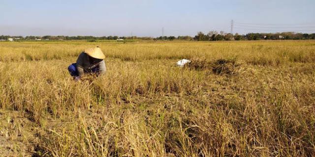Kemarau Telah Tiba, 63 Desa Di Rembang Terancam Kekeringan Dan Krisis Air Bersih