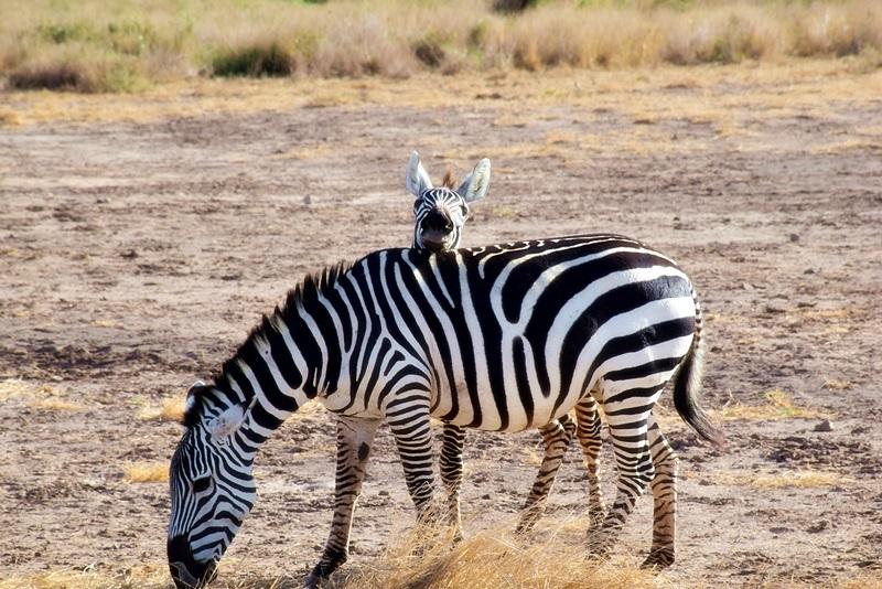 How to prepare to the safari