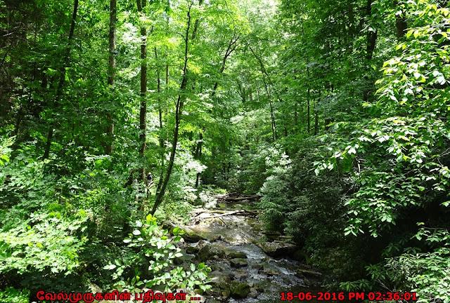 Georgia Unicoi State Park
