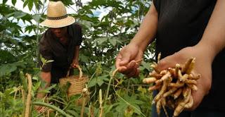Agricultores de nove municípios da PB recebem garantia-safra este mês